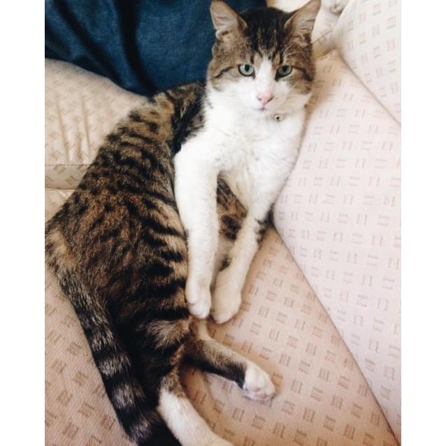 Photo of Cuddly Trevor