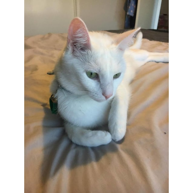 Photo of Lenny (Located In Cranbourne West)