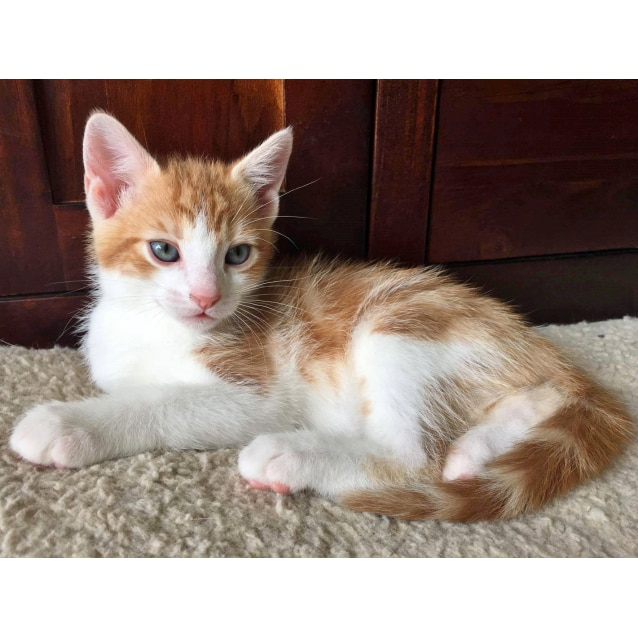 Photo of Rafter *Sydney Animal Rescue Inc.*