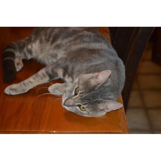 Photo of Merlow