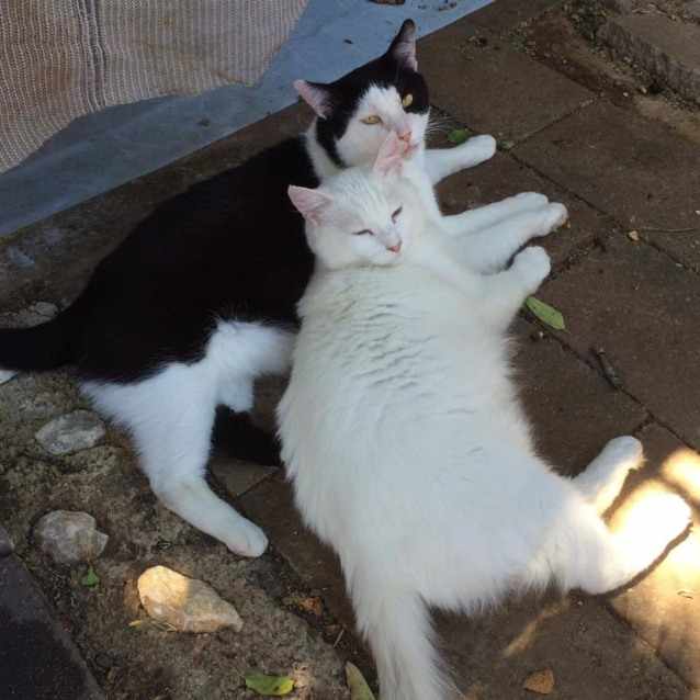 Photo of Hugo&Milky