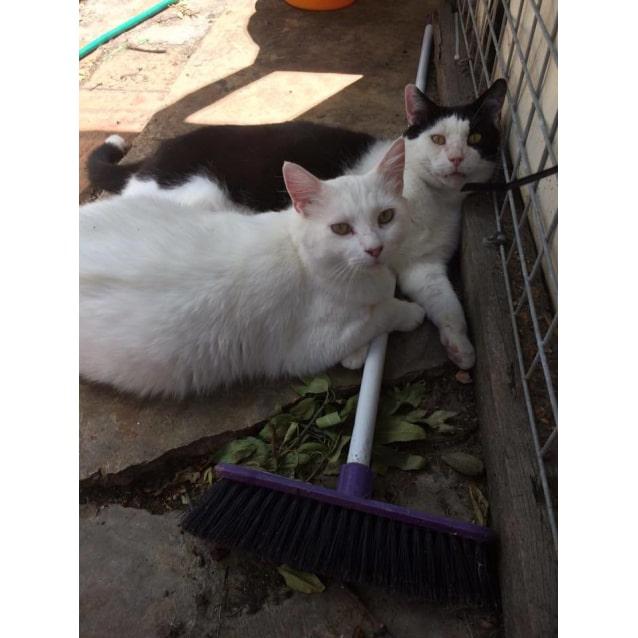 Photo of Hugo&Milky