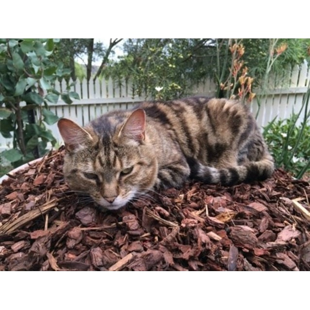 Photo of Sienna (Located In Bayswater)