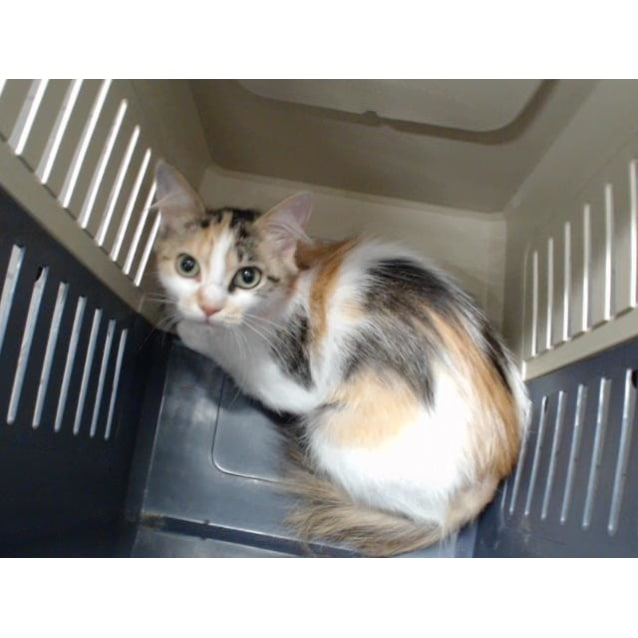 Photo of Nina (0089)