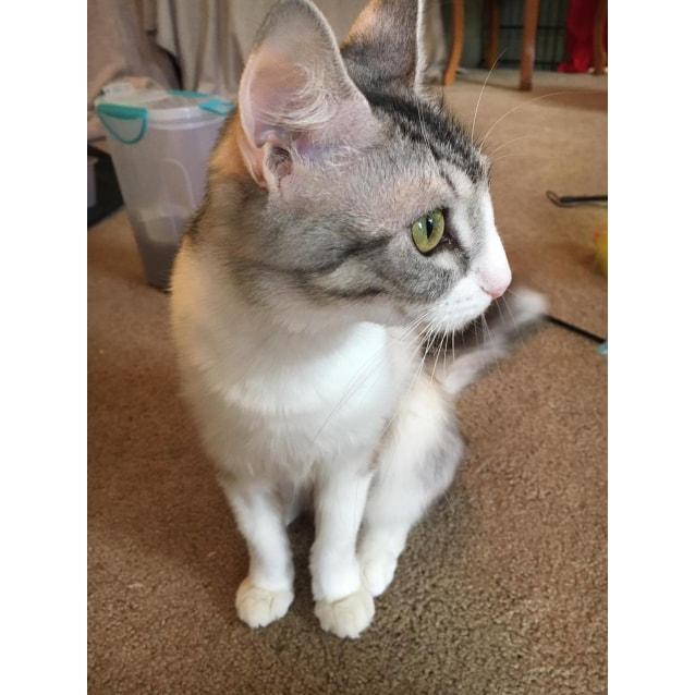 Photo of Beautiful Dory!