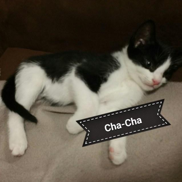 Photo of Cha Cha