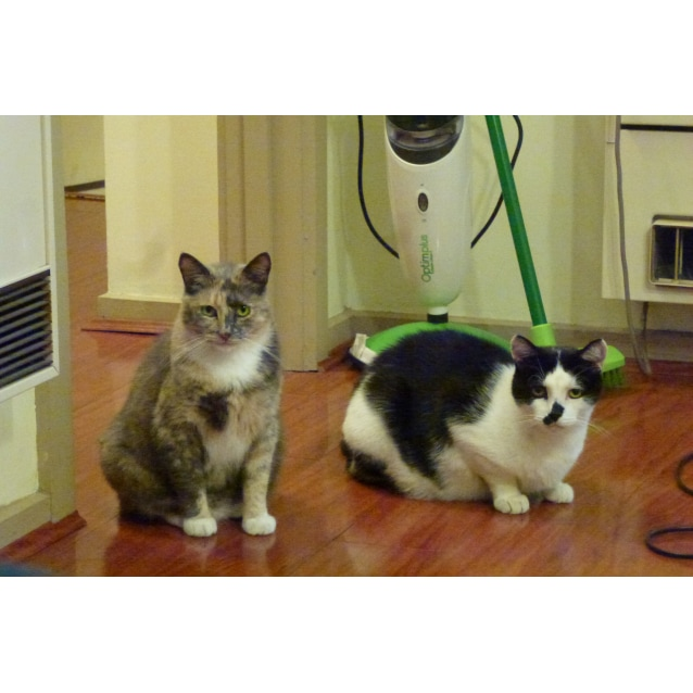 Photo of Honey & Smudge (Located In Carrum Downs)