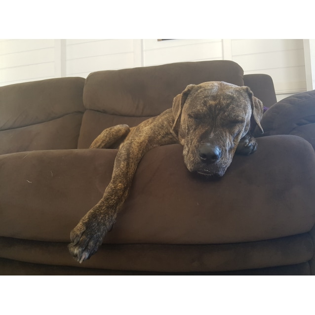 Photo of Diva (Adoption Pending)