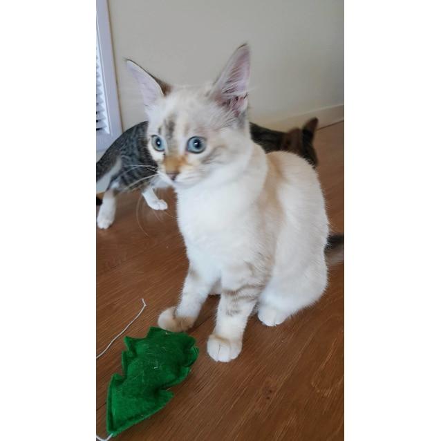 Photo of Charli