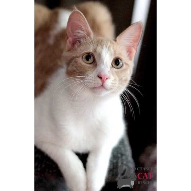 Photo of Agatha ** $100 Adoption Special**