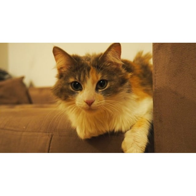 Photo of Amelia (Located In Footscray)