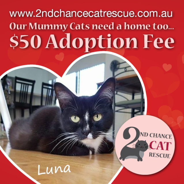 Photo of Luna **2nd Chance Cat Rescue**