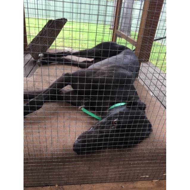 Photo of Rocky (Greenhound In Training)