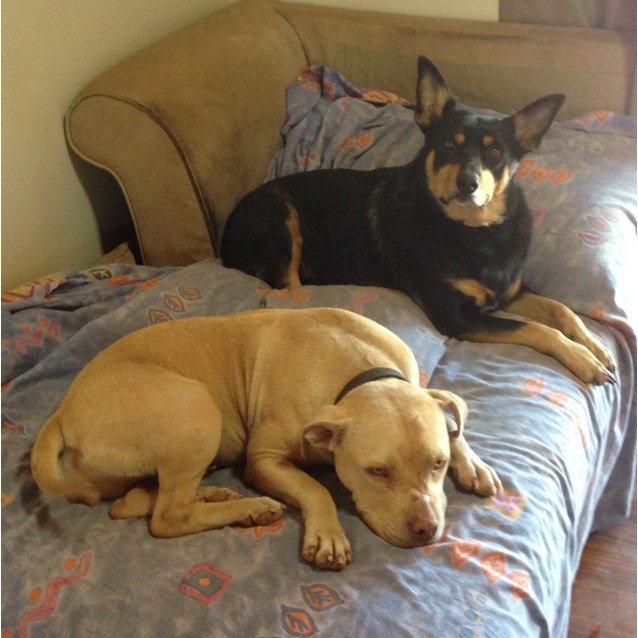 Photo of Harlow *On Trial In Her New Home*