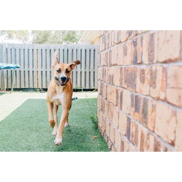 Photo of Audrey ~ $99 Adoption Fee ~