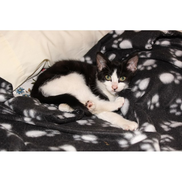 Photo of Hettie **2nd Chance Cat Rescue**