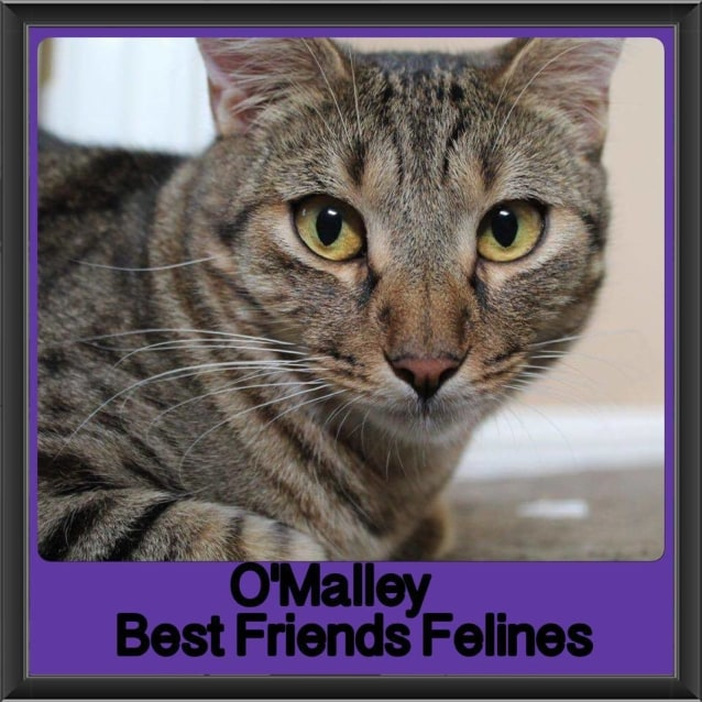 Photo of O'malley