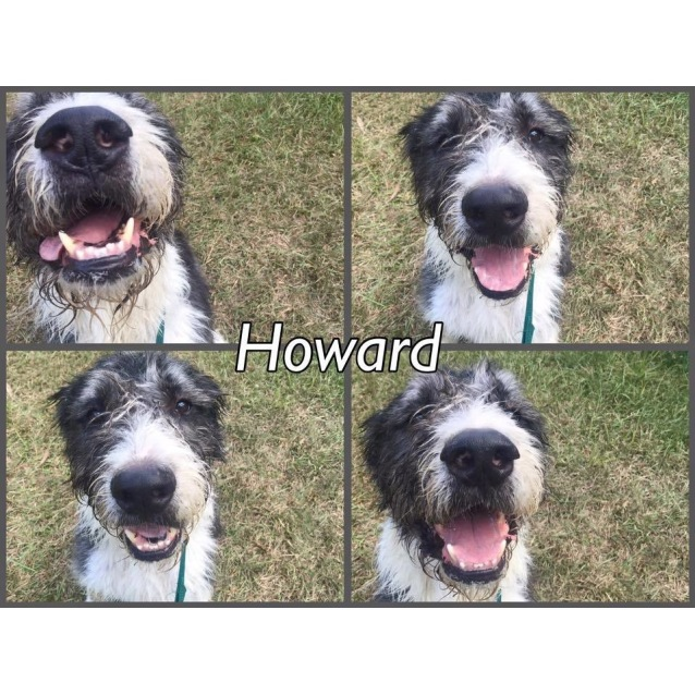 Photo of Howard