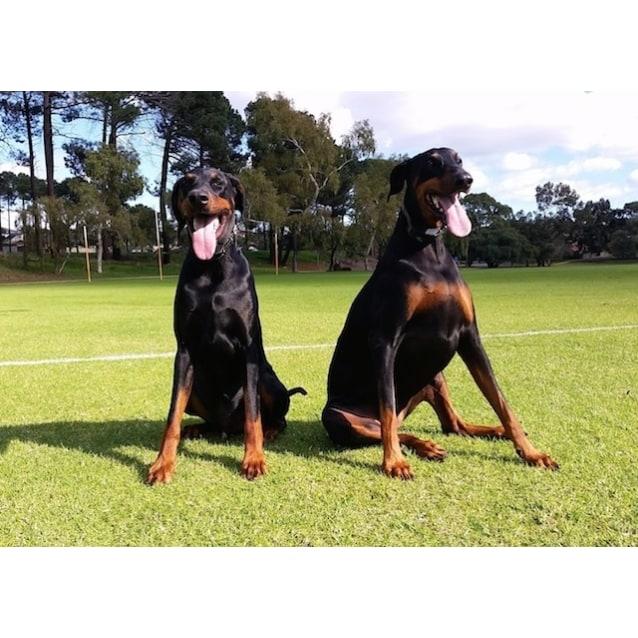 Photo of Rosie (& Sheikh)