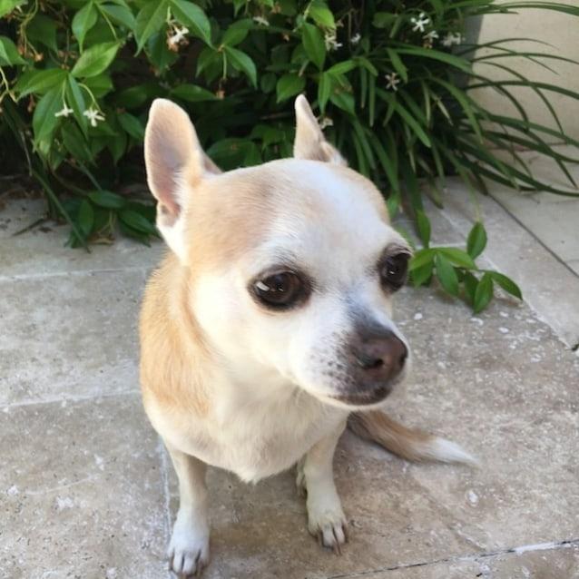 Photo of Oscar (& Izzy)