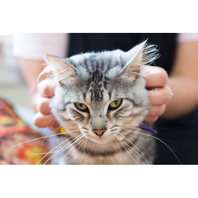 Photo of Thundercat