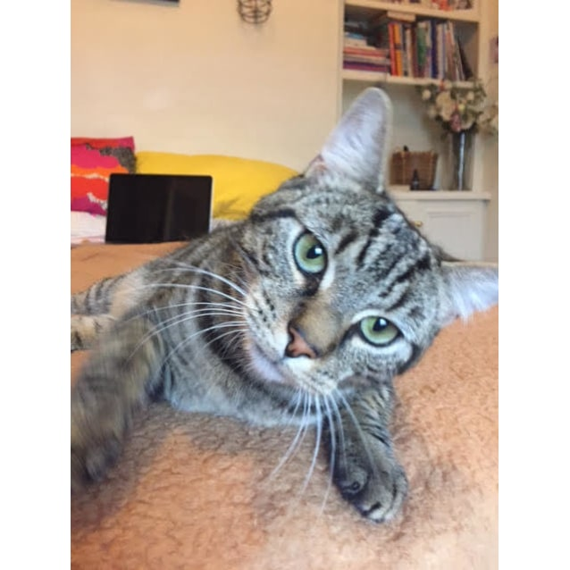 Photo of Snoopy (Hawthorn Foster Carer Needed)