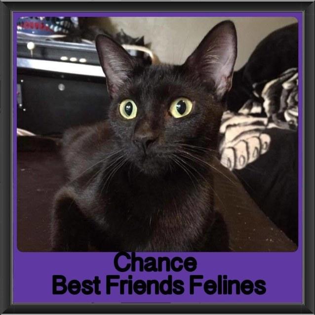 Photo of Chance