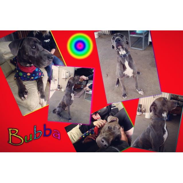 Photo of Bubba