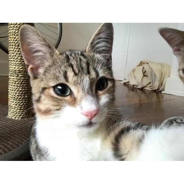 Photo of Oliver (Located In Coburg)