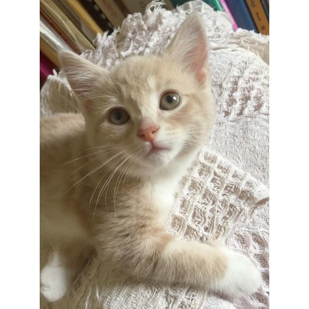 Photo of Lychee 🍾  Gentle Champagne Kitten