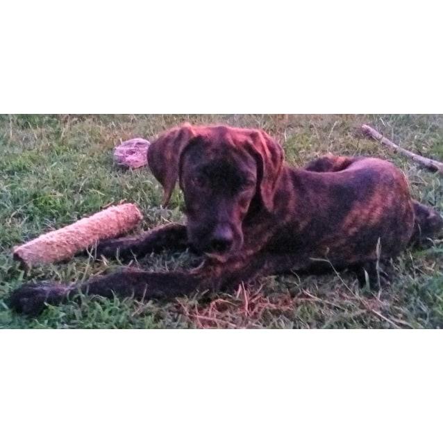Photo of Baxter