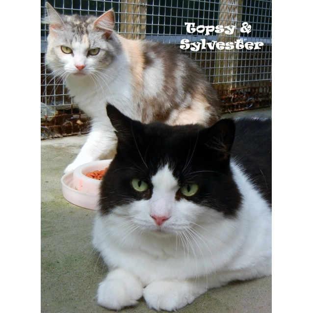 Photo of Sylvester&Topsy