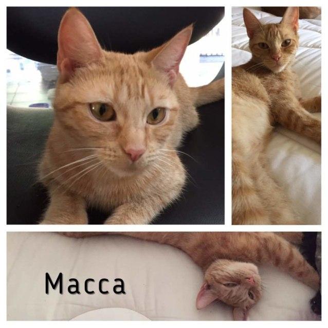 Photo of C Macca