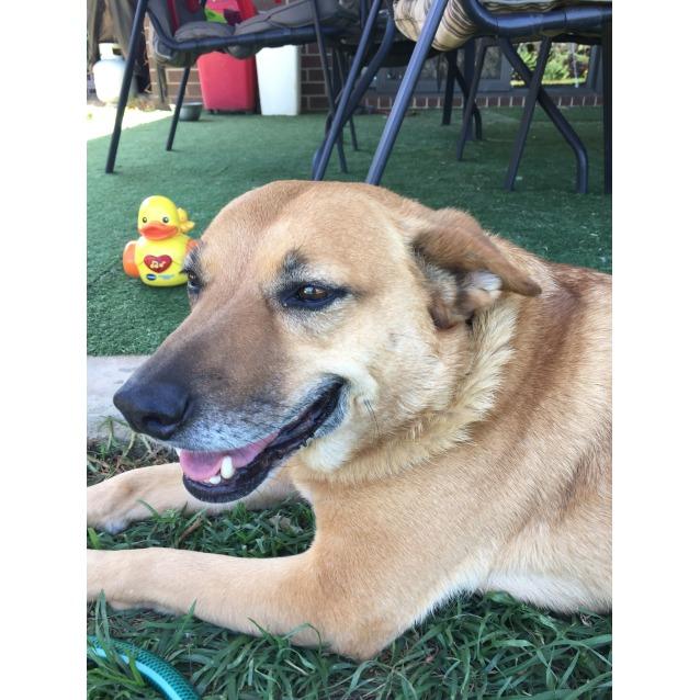 Photo of Georgie