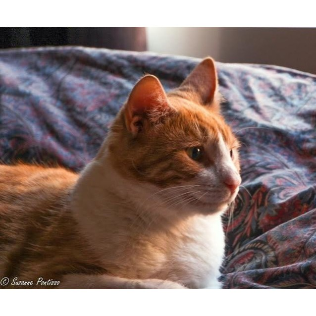 Photo of Rory (Located In Thornbury)
