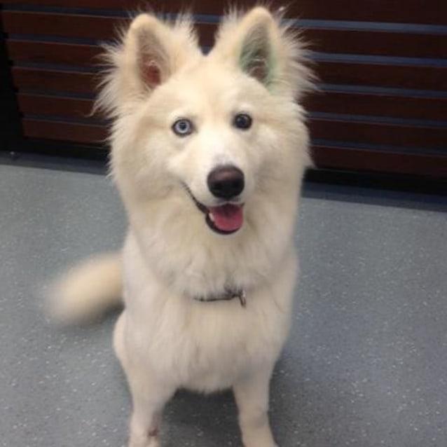 Vic Dog Rescue
