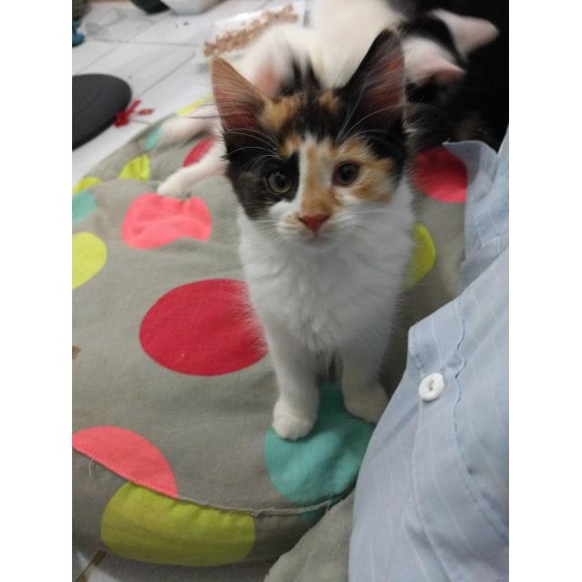 Photo of Jemimah   Cheeky Sweetheart!