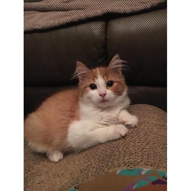Photo of Pringle (Aka Fluffy Princess)