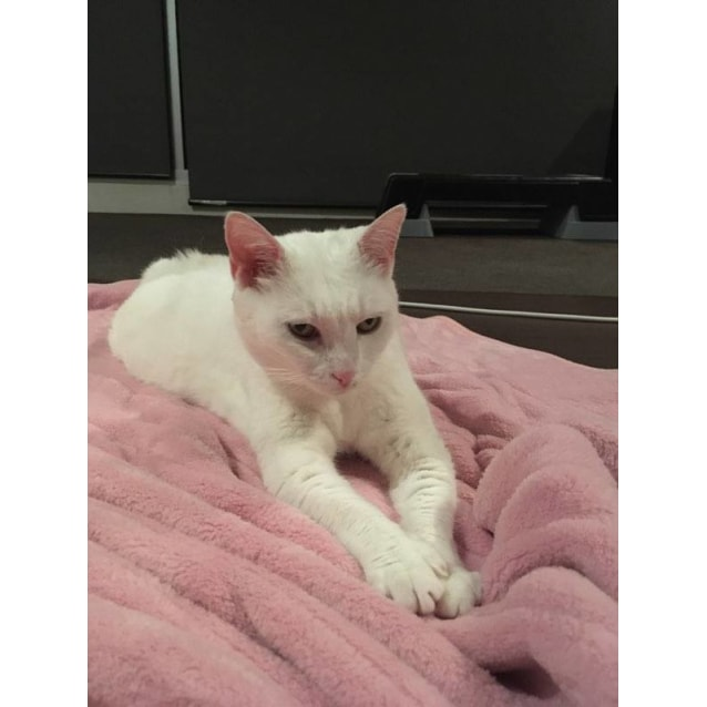 Photo of Tinkerbell   Located In St. Kilda East