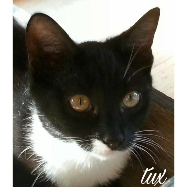 Photo of Tux