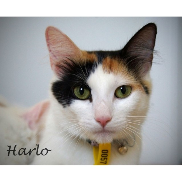 Photo of Harlo
