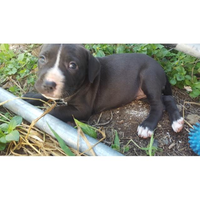 Photo of Chevy (Adoption Pending)