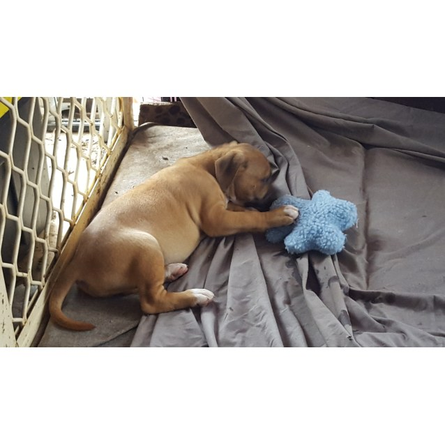 Photo of Ruby (Adoption Pending)