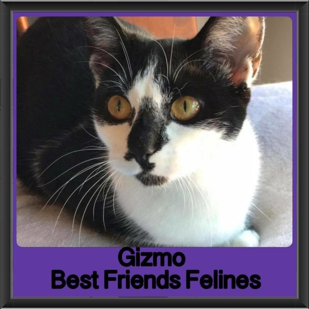 Photo of Gizmo