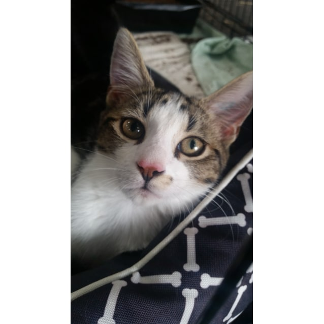 Photo of Stabler (Reduced Adoption Fee!)