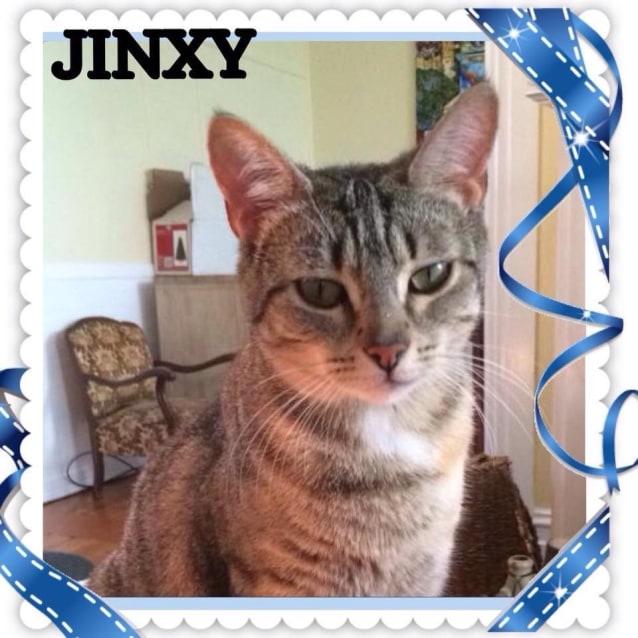 Photo of Jinxy