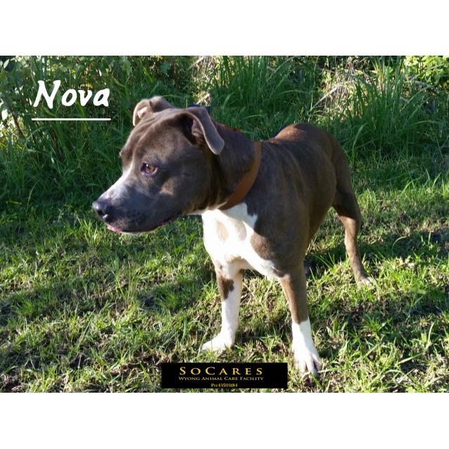 Photo of Nova