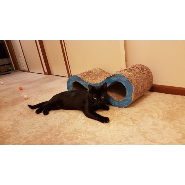 Photo of Midnight 🥀 Stunning Slinky Black Cat