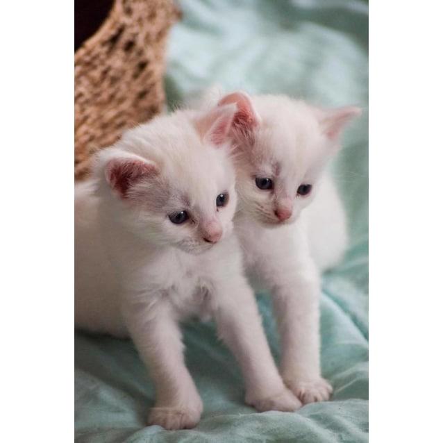 Photo of Tofu & Marshmallow