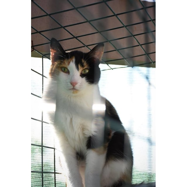 Photo of Patricia **2nd Chance Cat Rescue**
